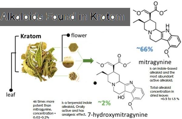Alkaloids Found in Kratom