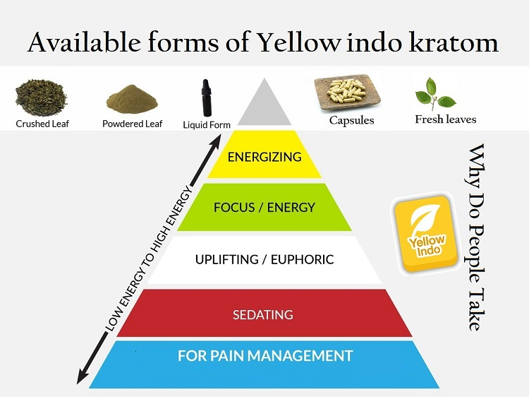 About Yellow Indo Kratom