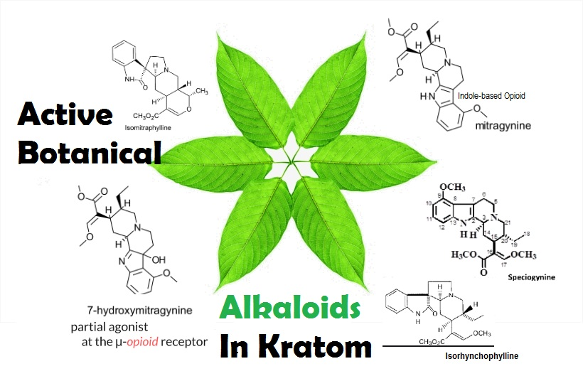 Kratom Compounds