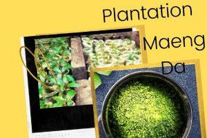 Plantation Maeng Da