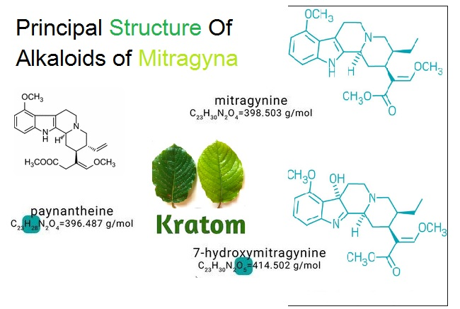 Kratom alkaloids